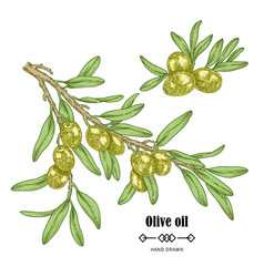 Hand drawn olive branch in sketch style vector