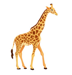 Giraffe standing isolated vector