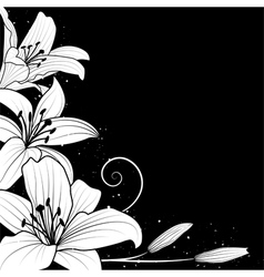 lily on black vector image
