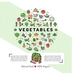 vegetables card concept organic shop natural vector image