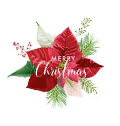 christmas winter poinsettia flower card vector image vector image