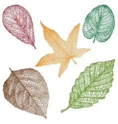 Detailed leaves vector