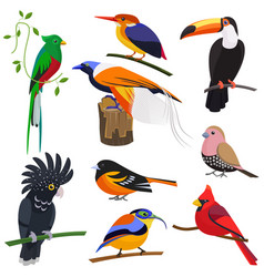 set of flat cartoon tropical exotic birds vector image vector image