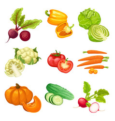 Cartoon organic vegetables set vector