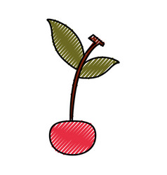 Cherry tropical and exotic fruit vector