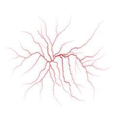 Red veins blood vessels and arteries vector