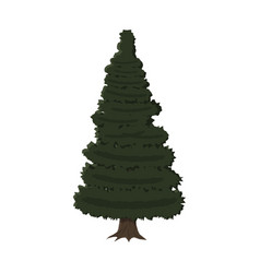 Spruce evergreen tree vector