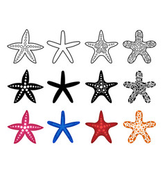 Starfish icon set vector