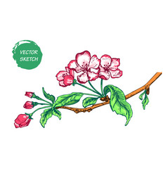 Appleflower sketch color-02 vector
