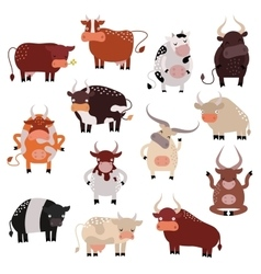 Cartoon cow action set with cute lovely heifer in vector
