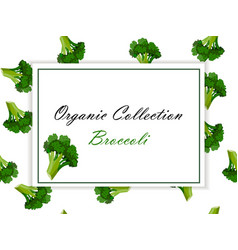 colorful broccoli label in sketch style vector image