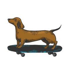 Dog on skateboard color sketch engraving vector