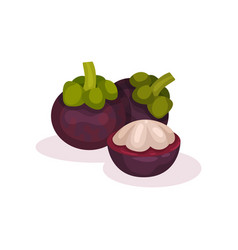 two whole and one half of mangosteen ripe exotic vector image