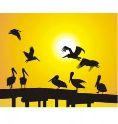 pelican silhouettes vector image