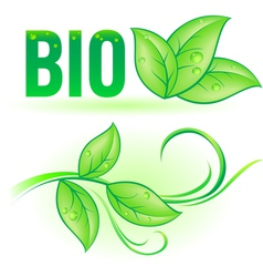 Bio word with leaf elements vector image vector image