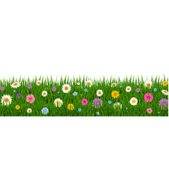green grass and flowers border vector image