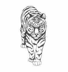 Tiger black and white hand drawing vector