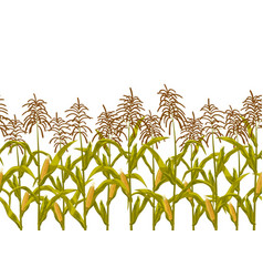 Corn maize seamless horizontal border vector
