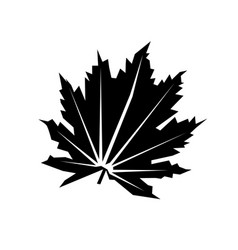 flat leaf icon isolated on white vector image