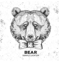Hipster animal bear hand drawing muzzle vector