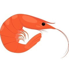 Cooked shrimp on white background vector image vector image