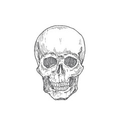 Hand drawn halloween scary scull vector