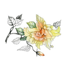 watercolor hand drawn flower on branch on white vector image vector image