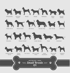Dog set - small breeds collection vector