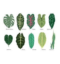 Exotic leaves set color vector