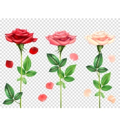 Realistic Roses Set vector image