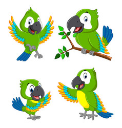 Collection green parrots vector