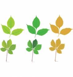 Seasonal leaves vector