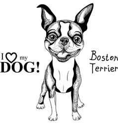 sketch dog Boston Terrier breed smiling vector image vector image