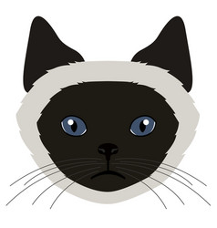 Balinese cat avatar cat breeds vector