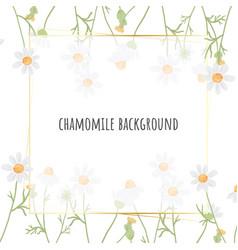 beautiful minimal white chamomile flower square vector image