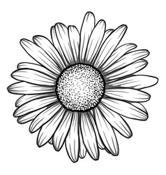 Beautiful monochrome black and white daisy flower vector