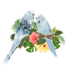 Birds budgerigars home pets blue pets parakeets vector