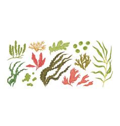 set colorful hand drawn edible algae vector image