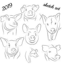 sketch of pig drawing pig and pork pig symbol vector image