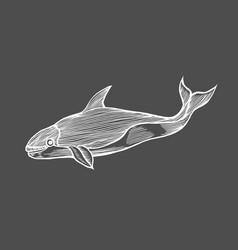 whale water animal engraving vector image