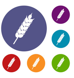 dried wheat ear icons set vector image