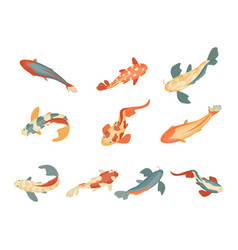 Color koi fish icon set on a white background vector