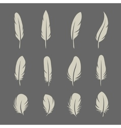 feathers retro set vector image