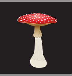 fly agaric mushroom isolated on black background vector image