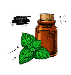 mint essential oil bottle and peppermint leaves vector image