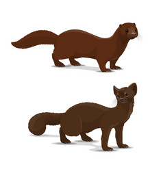 Sable and mink cartoon animal vector