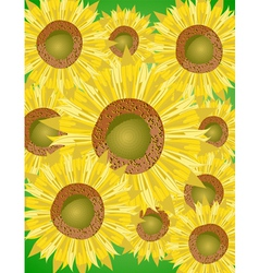 Sunflower bed vector