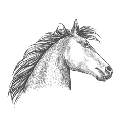 Artistic horse head sketch portrait vector