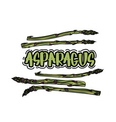 asparagus vegetable stem vector image