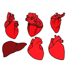 Human heart icon cartoon style vector